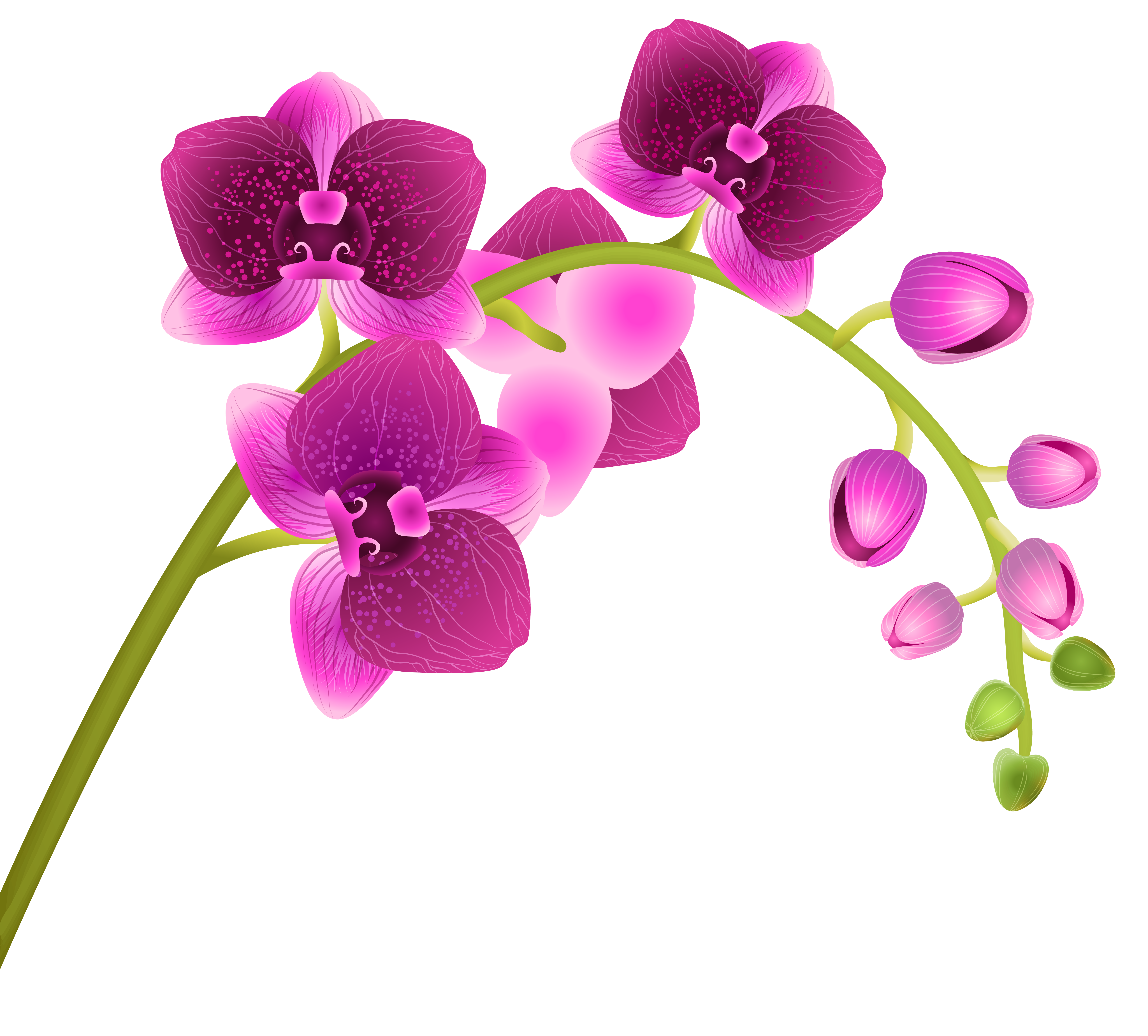 Orchid logo png Transparent pictures on F.