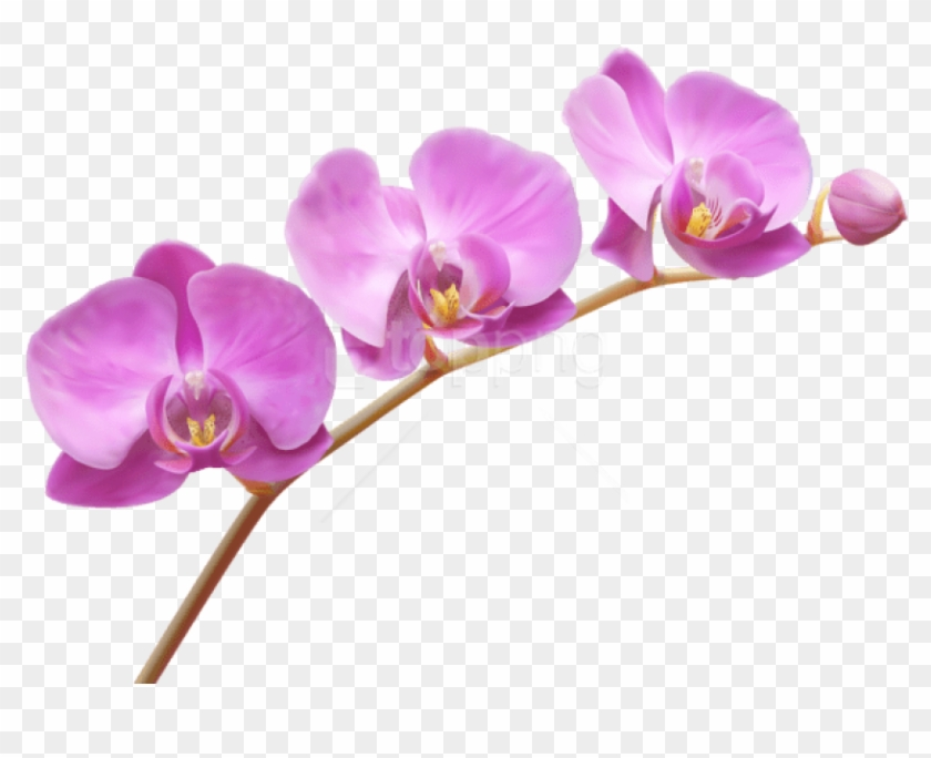 Free Png Download Orchids Transparent Png Images Background.
