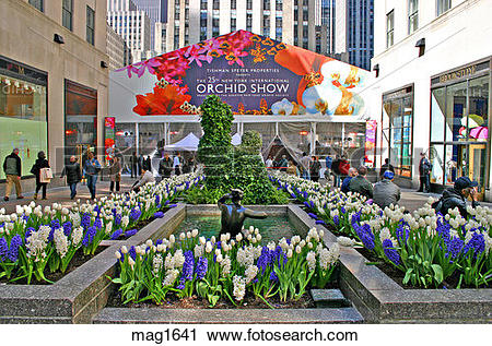Stock Photography of Orchid Show Rockefeller Center New York City.
