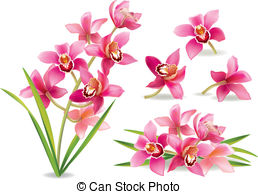 Orchid Clipart and Stock Illustrations. 7,529 Orchid vector EPS.
