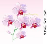 Orchidaceae Vector Clipart Illustrations. 33 Orchidaceae clip art.