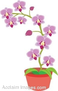 Showing post & media for Cartoon orchid flower clip art.