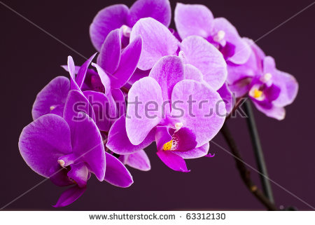 Orchidales Stock Photos, Royalty.