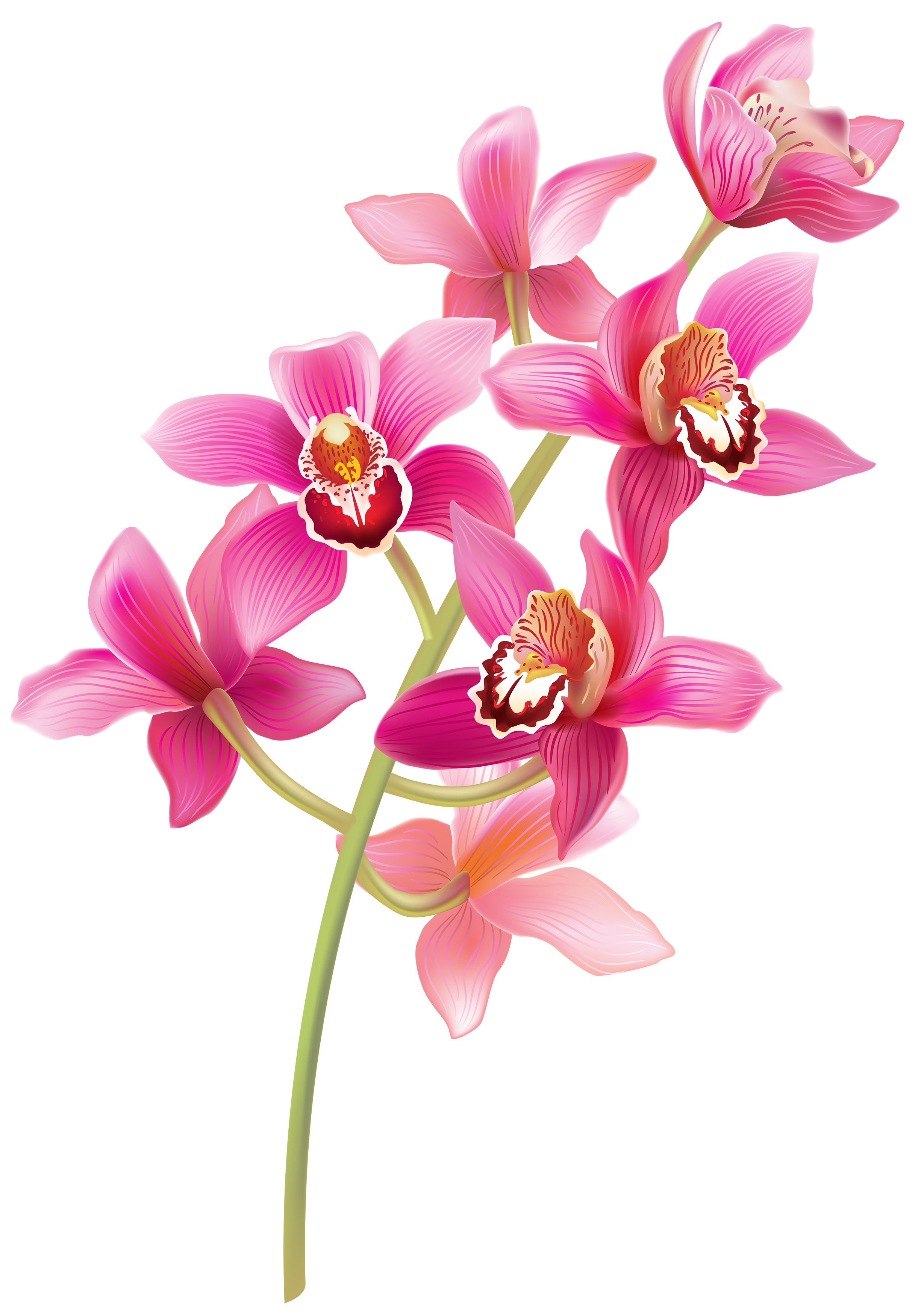 Stem Pink Orchids PNG Clipart.