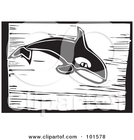 Clipart of a Killer Whale Orca.