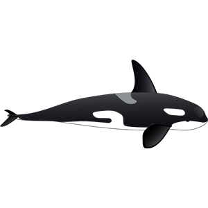 Orca clipart, cliparts of Orca free download (wmf, eps, emf, svg.
