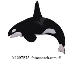 Orcinus orca Clip Art and Stock Illustrations. 60 orcinus orca EPS.