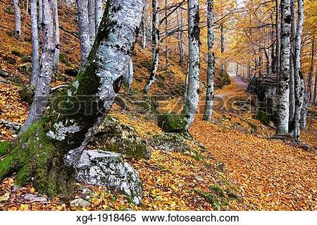 Stock Image of Bosque de las Hayas.