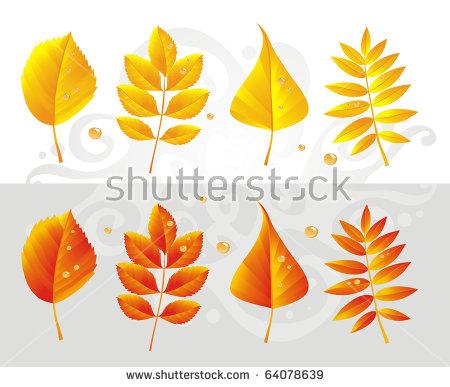 Ash Leaf Stock Photos, Royalty.