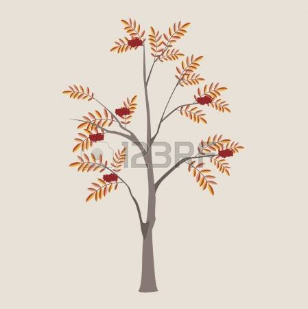 1,486 Mountain Ash Stock Illustrations, Cliparts And Royalty Free.