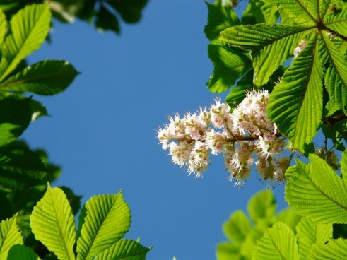 Flower free stock photos download (10,859 Free stock photos) for.