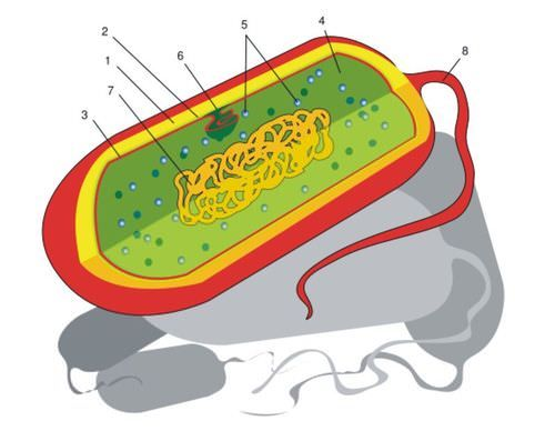 1000+ ideas about Structure Of Plant Cell on Pinterest.