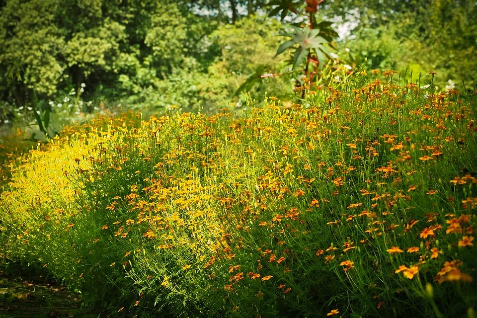 Free photo: Sun Hat, Flowers.