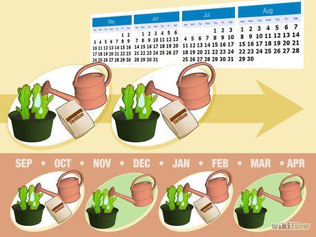 1000+ ideas about Cactus Fotos on Pinterest.