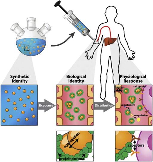 Enhancement of adaptive biological effects by nanotechnology.