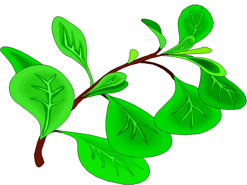 Gallery For > Herb Oregano Clipart.