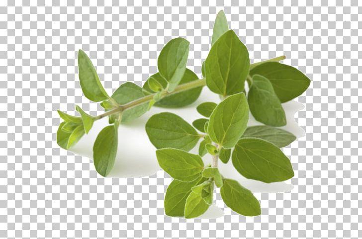 Oregano Herb Greek Cuisine Food Spice PNG, Clipart, Ajwain.