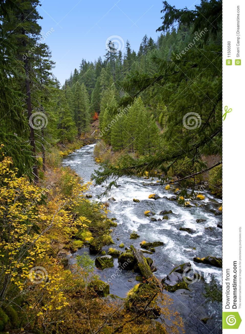 Scenic Rogue River.