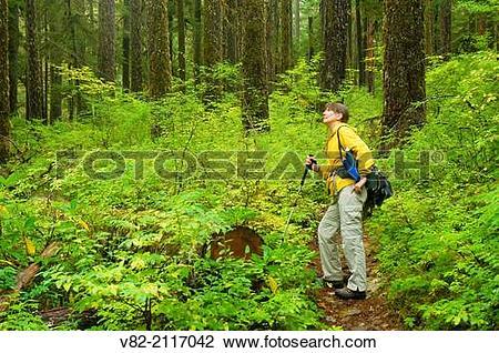 Stock Photo of Opal Creek Trail, Opal Creek Scenic Recreation Area.