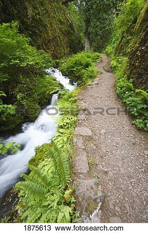 Stock Photo of oregon, united states of america; small creek along.