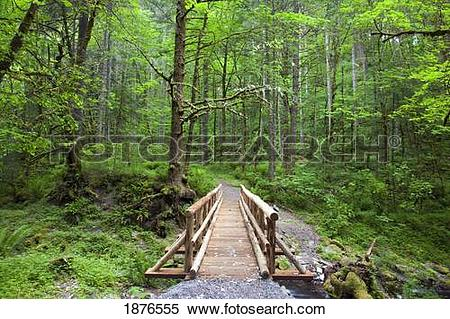 Stock Image of Oregon, United States Of America; A Wooden Walkway.