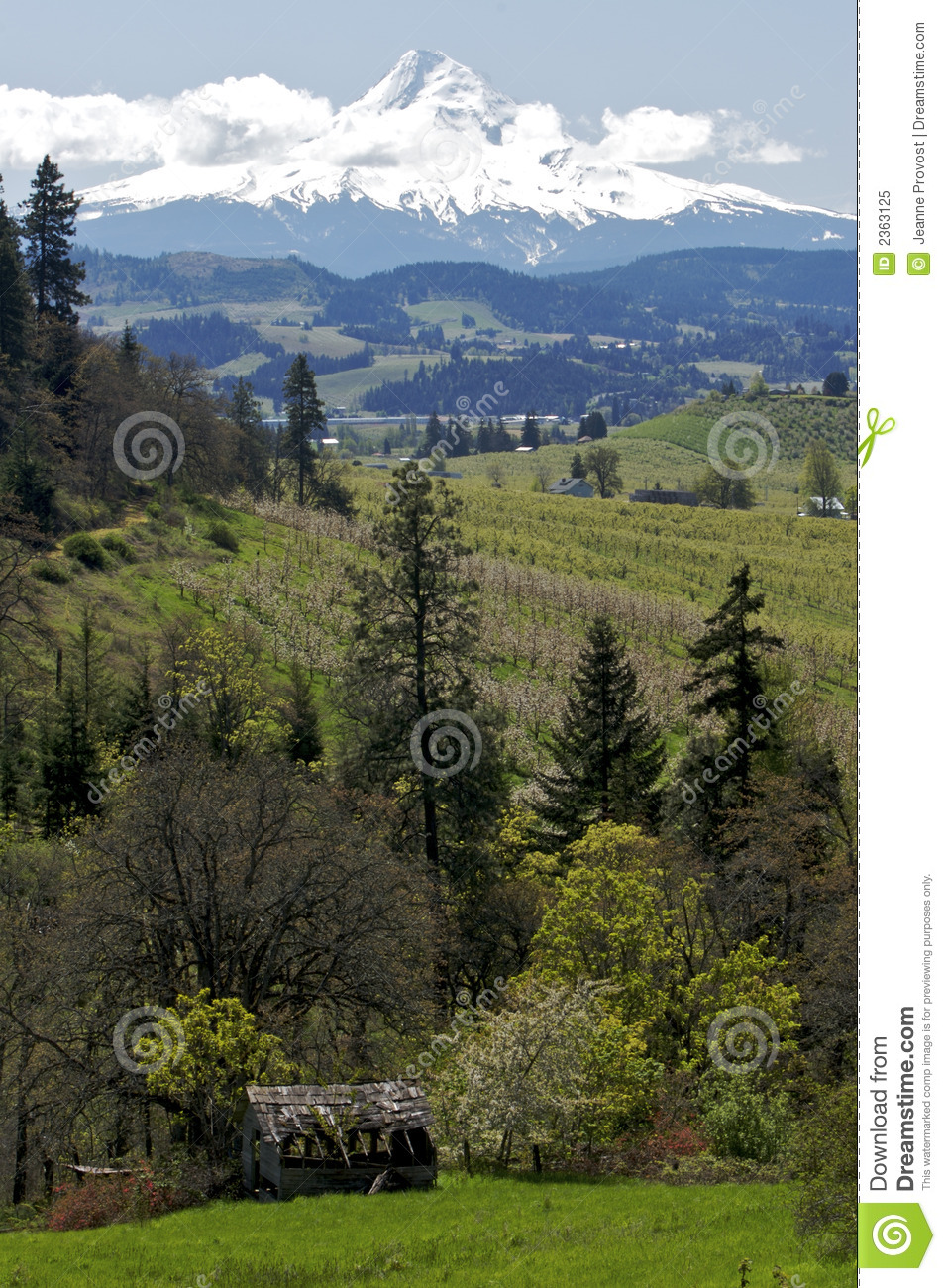 Mt Hood And Oregon Scenery Royalty Free Stock Photo.
