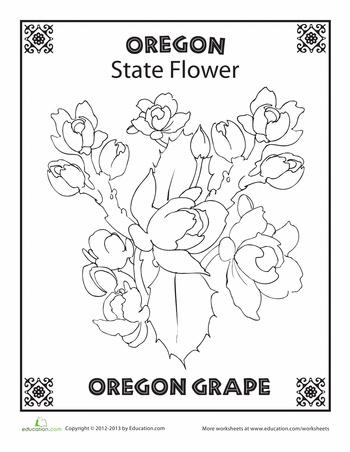 Oregon State Flower.