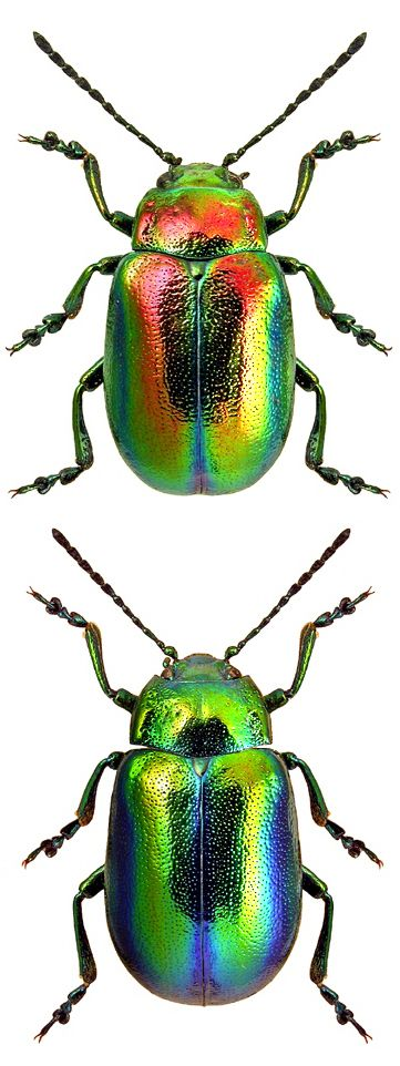 1000+ images about Beetles and insecta on Pinterest.