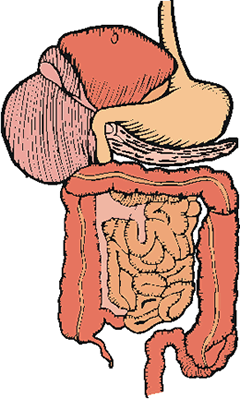 Organ system clipart clipart images gallery for free.