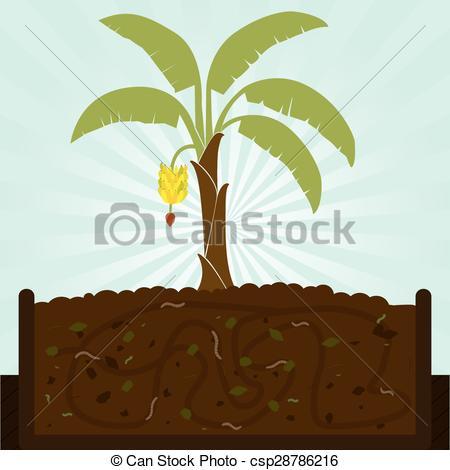 Vector Clip Art of Banana tree and compost.