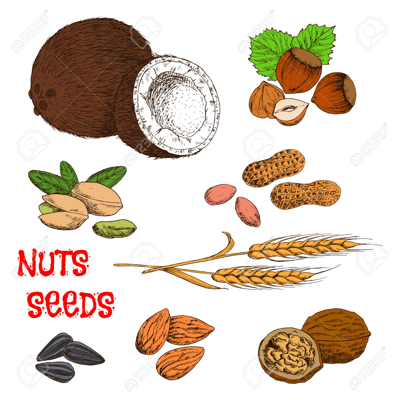 Nutritious Raw And Dried Walnuts, Almonds, Peanuts, Pistachios.