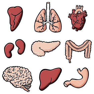 Organs.