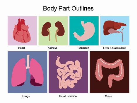 Body organs clipart.
