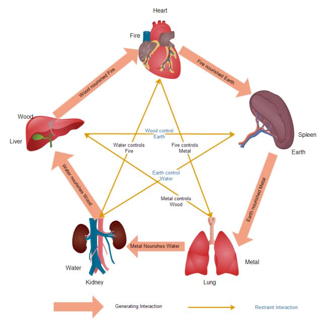 Human Organs Clipart.