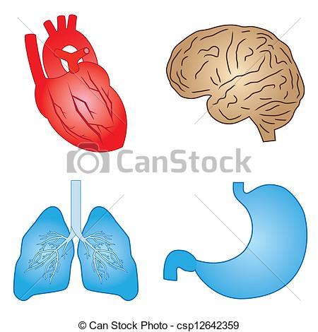 Organs Vector Clipart Royalty Free. 16,597 Organs clip art vector.