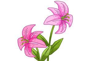 Free Stargazer Lily Cliparts, Download Free Clip Art, Free.