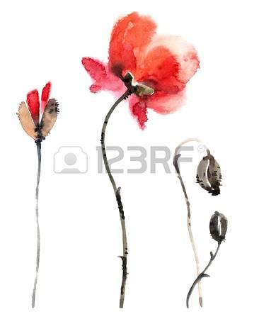 182 Oriental Poppy Stock Vector Illustration And Royalty Free.