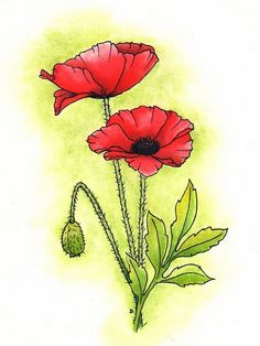 Oriental poppy Coloring page.