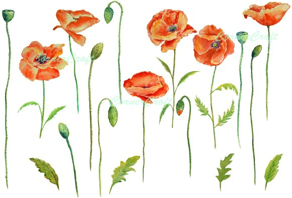 Watercolor Red Poppies Clip Art ~ Illustrations on Creative Market.