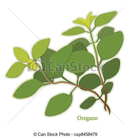 Oregano Clip Art Vector and Illustration. 457 Oregano clipart.