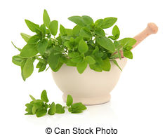 Oregano Images and Stock Photos. 14,672 Oregano photography and.