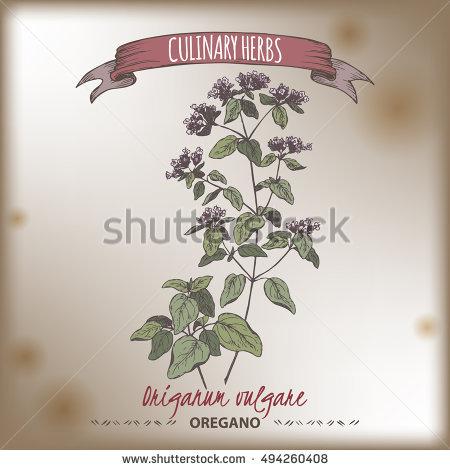 Origanum Vulgare Stock Photos, Royalty.