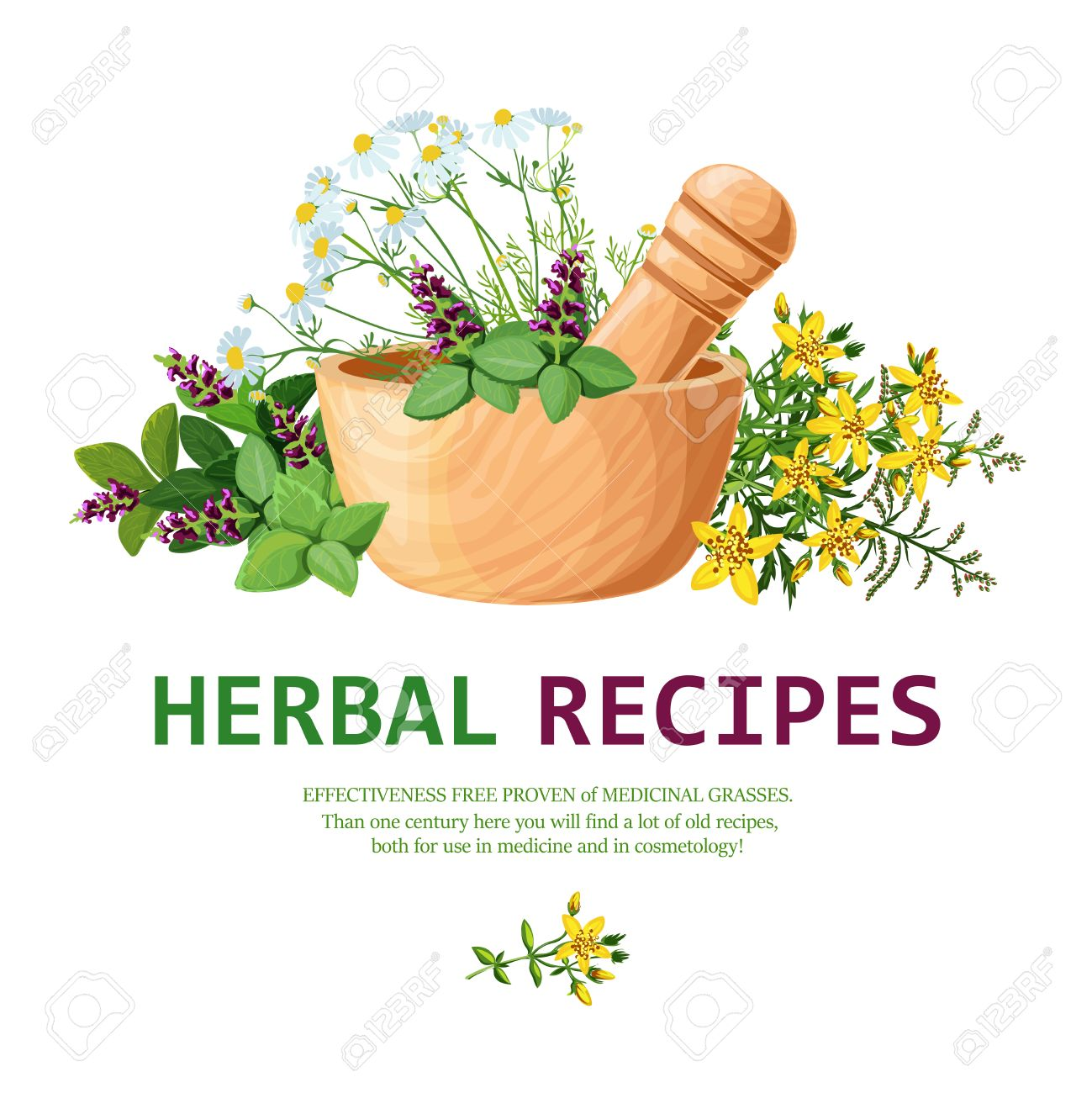 Original Color Illustration Of Medicinal Herbs In Clay Mortar.