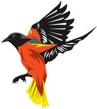 Baltimore Oriole Clip Art Download 50 clip arts (Page 1.
