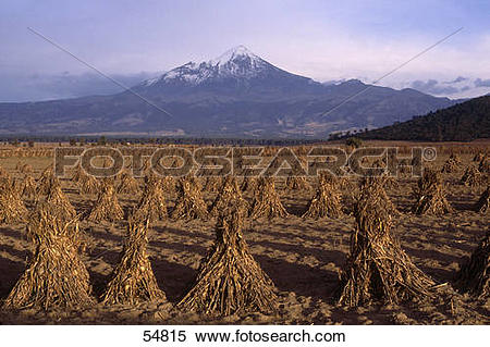 Stock Image of Corns stacks in field with volcanic mountain in.