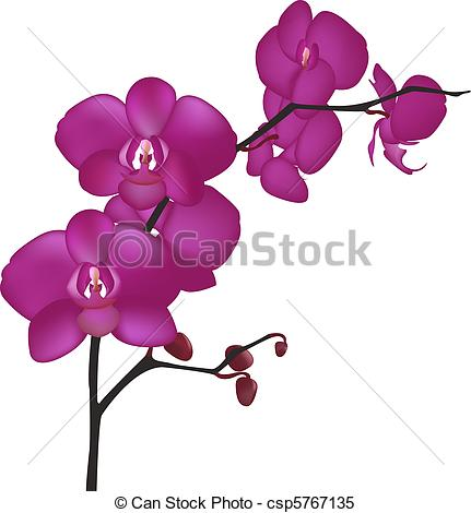 Orchid Stock Photo Images. 66,791 Orchid royalty free pictures and.