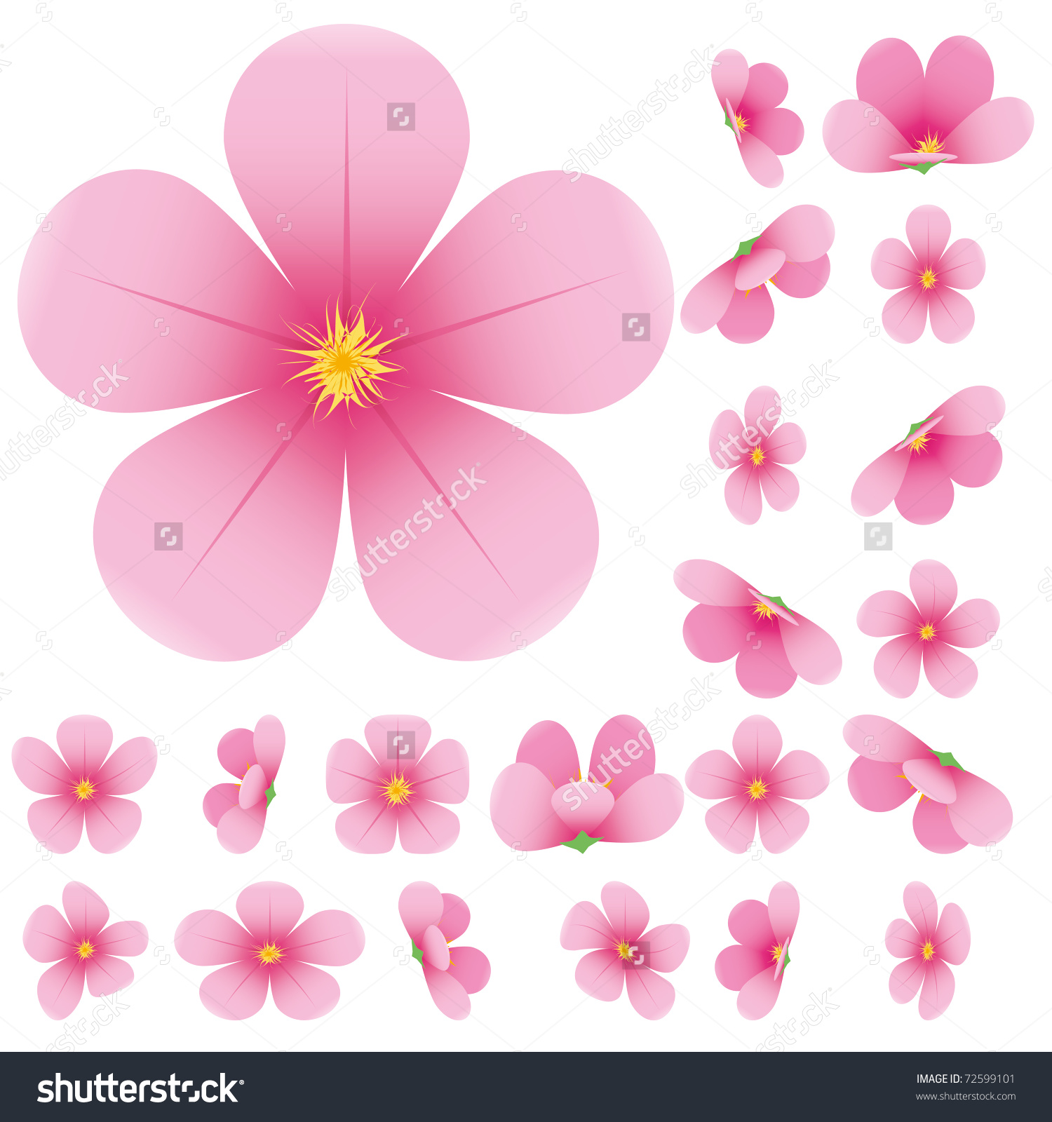 Cherry Blossom Flowers Sakura Set Pink Stock Vector 72599101.