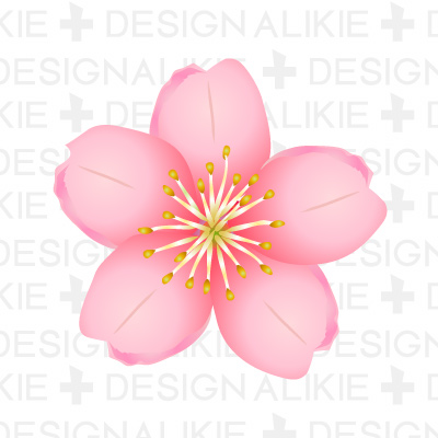 Cherry blossom flower clipart.