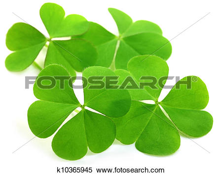 Stock Image of Decorative clover leaves k10365945.