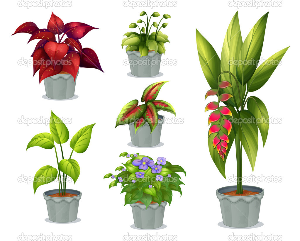 Six ornamental plants — Stock Vector © interactimages #20979511.